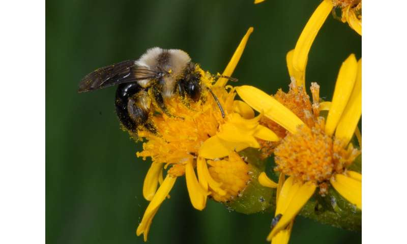 Out of sync: Ecologists report climate change affecting bee, plant life cycles