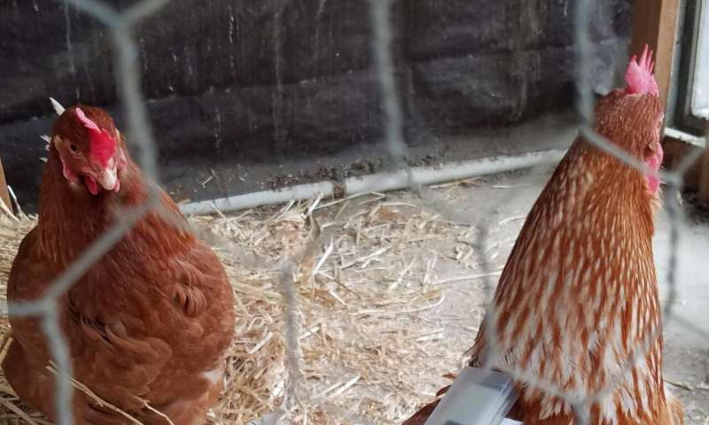Parasite infestations revealed by tiny chicken backpacks