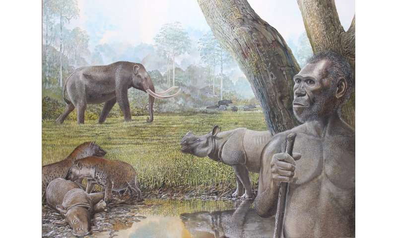Past tropical forest changes drove megafauna and hominin extinctions