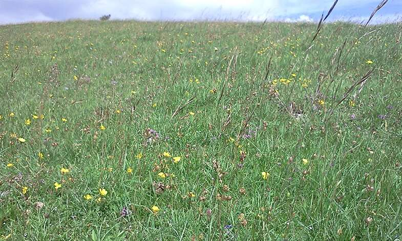 Peak district grasslands hold key to global plant diversity