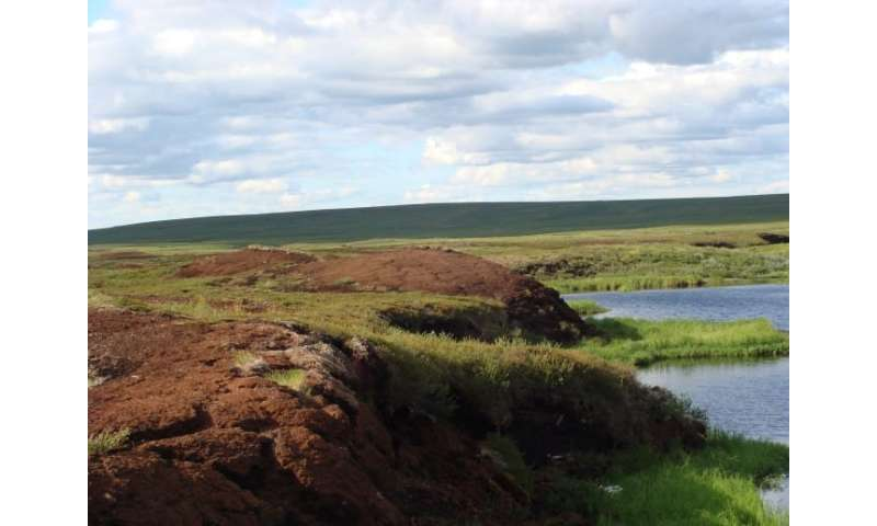 Peatland carbon and nitrogen stocks vulnerable to permafrost thaw