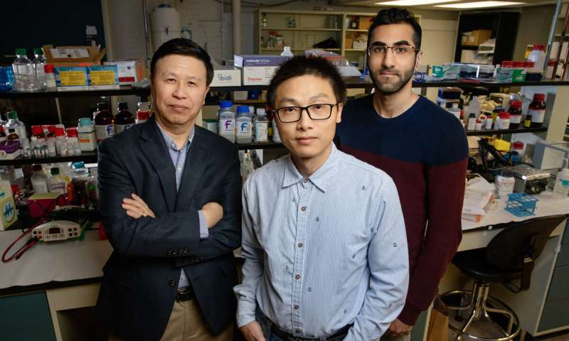 Physical force alone spurs gene expression, study reveals
