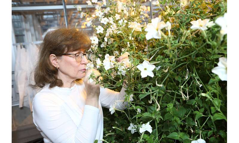 Plant defense layer has unexpected effect on volatile compounds, study finds