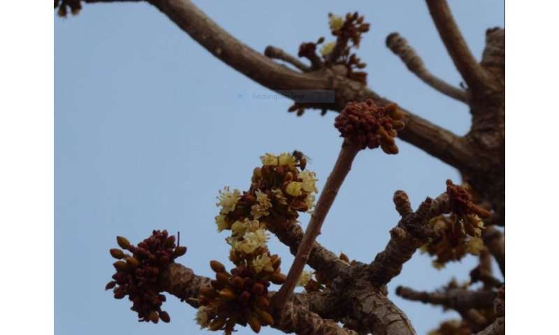 Plant diversity makes West Africa's shea trees bear more fruit