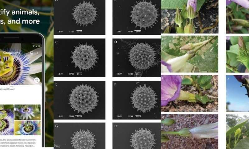 Plants: the known unknowns which are undermining conservation