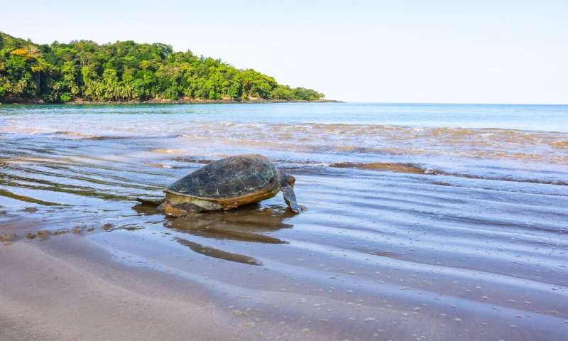 Plastic pollution poses new threat to a turtle paradise