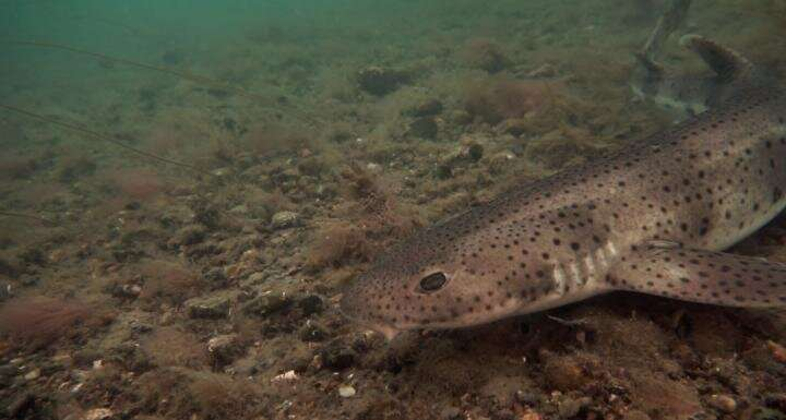Plastics found in sea-bed sharks