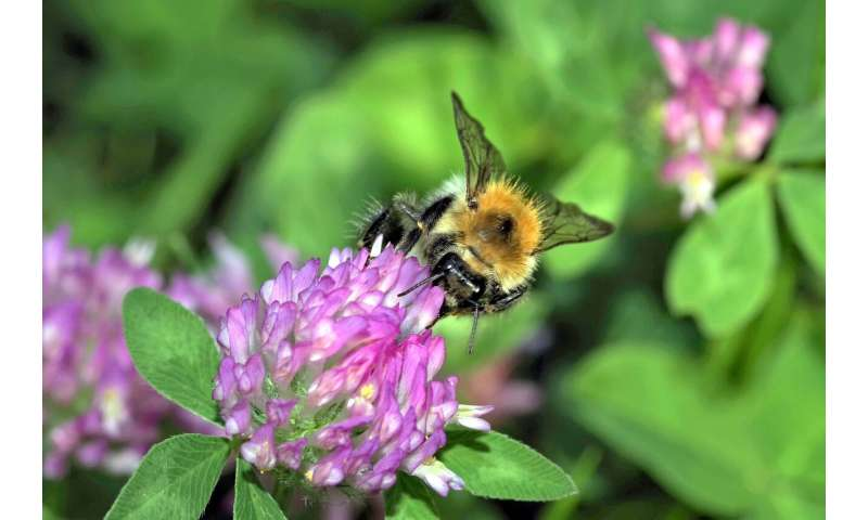 Pollination is better in cities than in the countryside