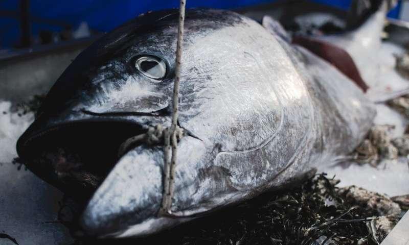 Popular fish species disappear from Turkey's Marmara and Black Seas