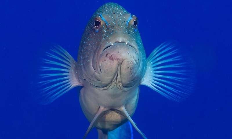 'Portfolio' of marine reserves enhances fish populations