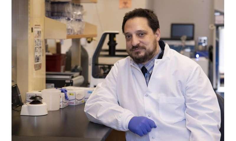 Potential way to halt blinding macular degeneration identified
