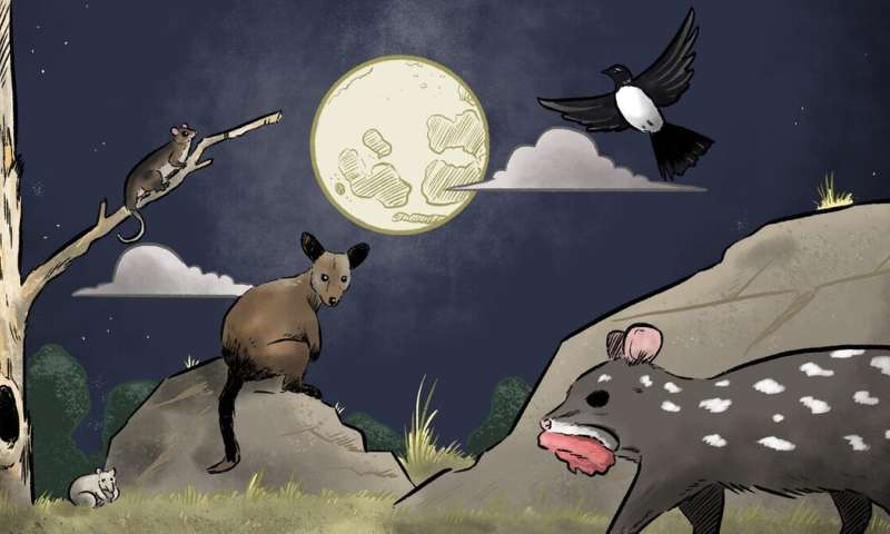Predators, prey and moonlight singing: how phases of the Moon affect native wildlife