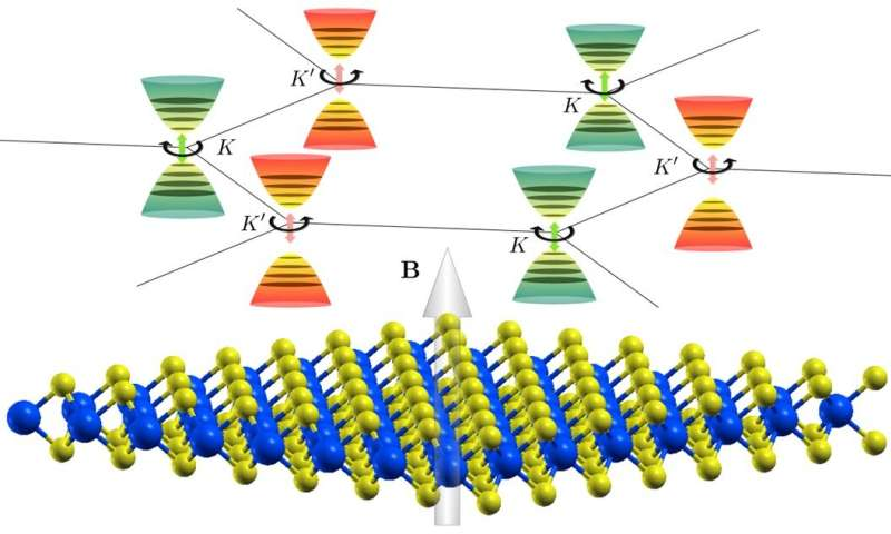 Predictions of magnetic field response in 2D valleytronics materials