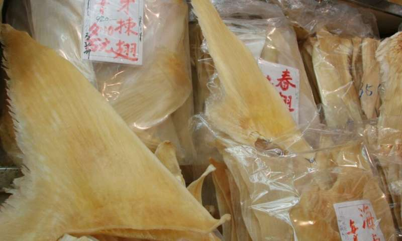 Preferably with the headline: Mercury levels in shark fins illegal and dangerous to human health
