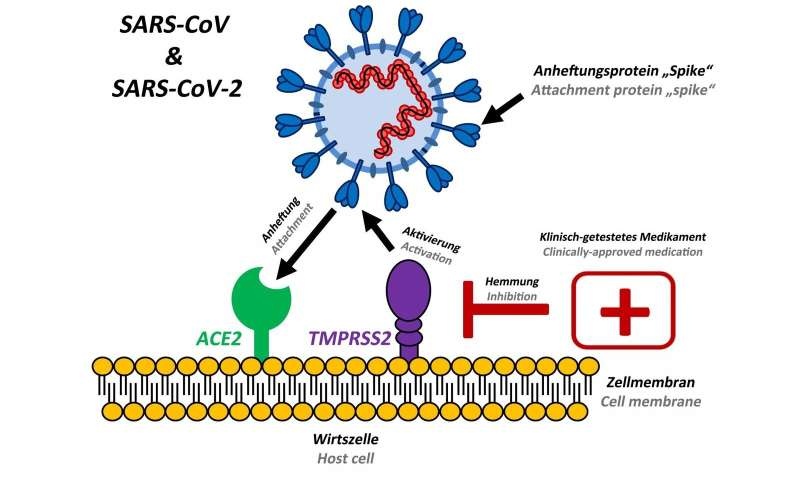 Preventing spread of SARS coronavirus-2 in humans