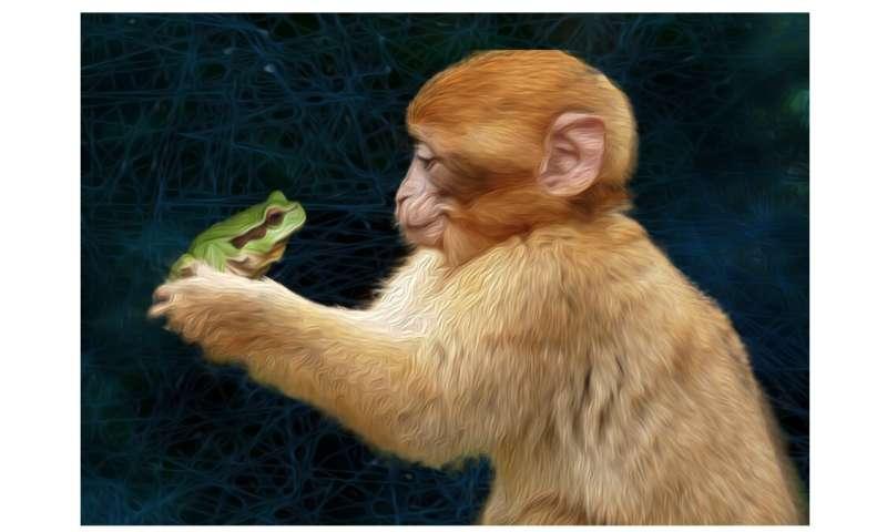 Primates aren't quite frogs