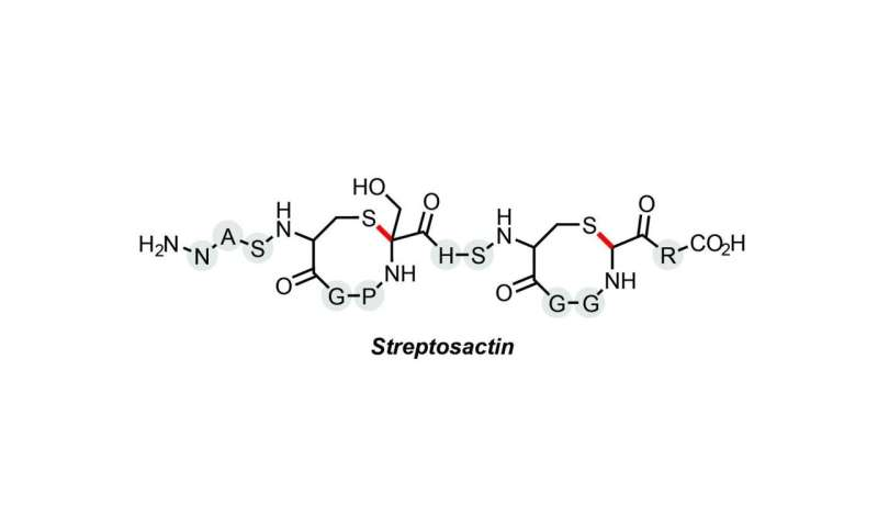 "Princeton lab discovers small ""Cain-and-Abel"" molecule"