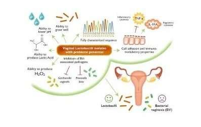 Probiotics with top-performing Lactobacillus strains may improve vaginal health