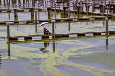 Problems with cyanobacteria will worsen if CO2 concentrations continue to rise