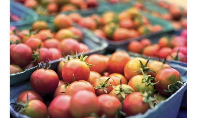 Discovering gaps in food safety practices of small Texas farms thumbnail