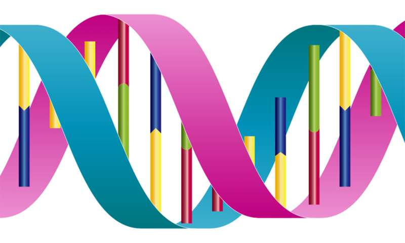 'Proofreading' proteins stop and reel in DNA to correct replication errors