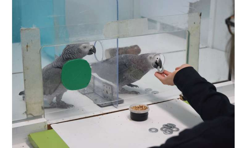 Prosocial and tolerant parrots help others to obtain food