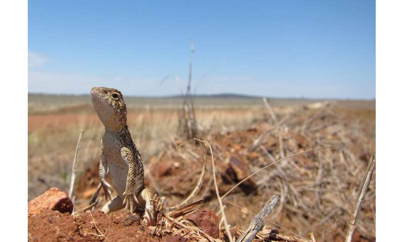 Protecting Australia's reptiles and amphibians with global impact