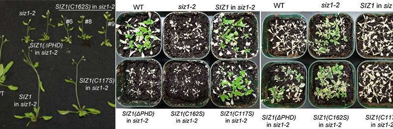 Putting a finger on plant stress response