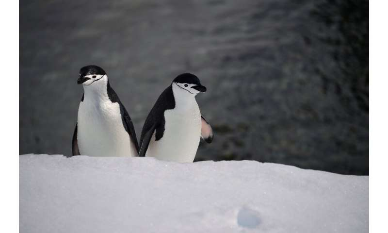 """""""Antarctic biodiversity helps us understand what life may be like elsewhere in the Universe,"""" said Monash University p"""