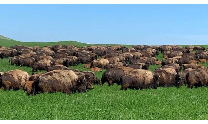 Los ganaderos ven el agua y el trabajo como desafíos de pastoreo rotativo
