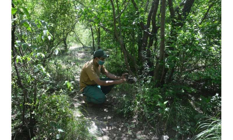 Ranger Imran Khan checks on a camera that monitors wildlife in Pakistan's Margalla Hills National Park