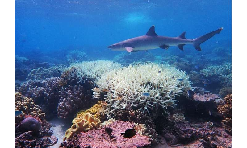 Recent phenomena such as the mass bleaching of the Great Barrier reef suggest heat-related die-off is already occuring in places