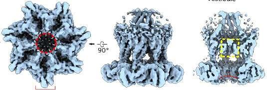 Receptors under flow