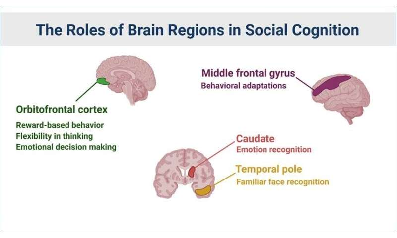 Regular social engagement linked to healthier brain microstructure in older adults