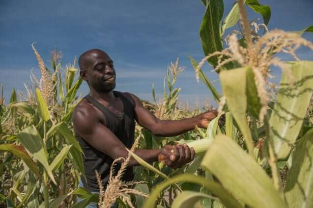 Re-imagining Africa's food future at the intersection of agriculture and conservation