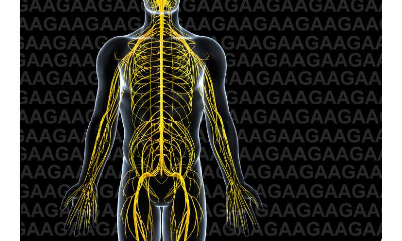 Researchers suggest a pathway to reverse the genetic defect of Friedreich's ataxia