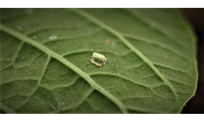 Research looks to beneficial insects for pest control