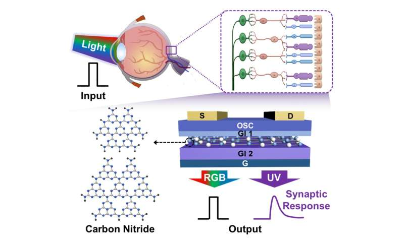 Retina-inspired carbon nitride-based photonic synapses for selective detection of UV light