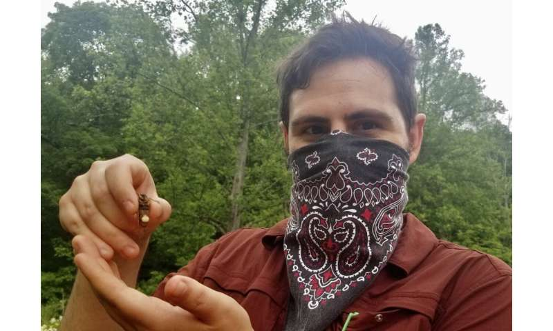 Return of the zombie cicadas: WVU team unearths manipulative qualities of fungal-infected flyers