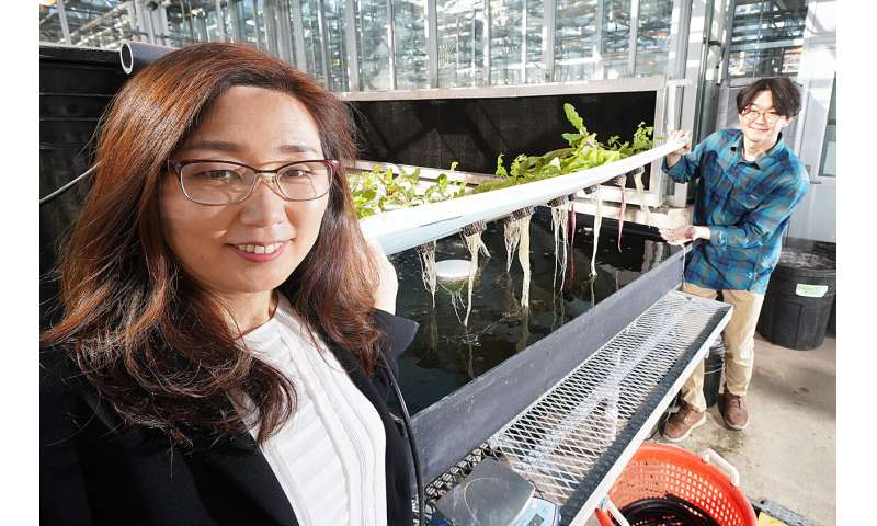 Risk of E. coli in hydroponic and aquaponic systems may be greater than once thought