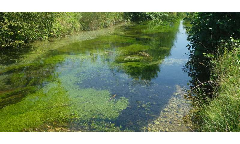 River plants counter both flooding and drought to protect biodiversity