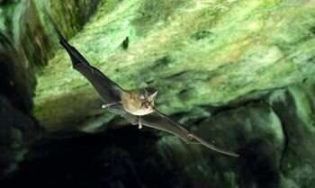 Road traffic noise causes bat activity to decrease by two thirds, as bats find it 'irritating'