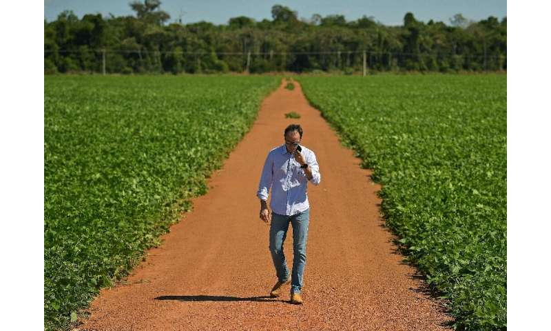 Rodrigo Pozzobon walks in a soybean field on his property in Vera, in Brazil's Mato Grosso state—business is booming thanks to s