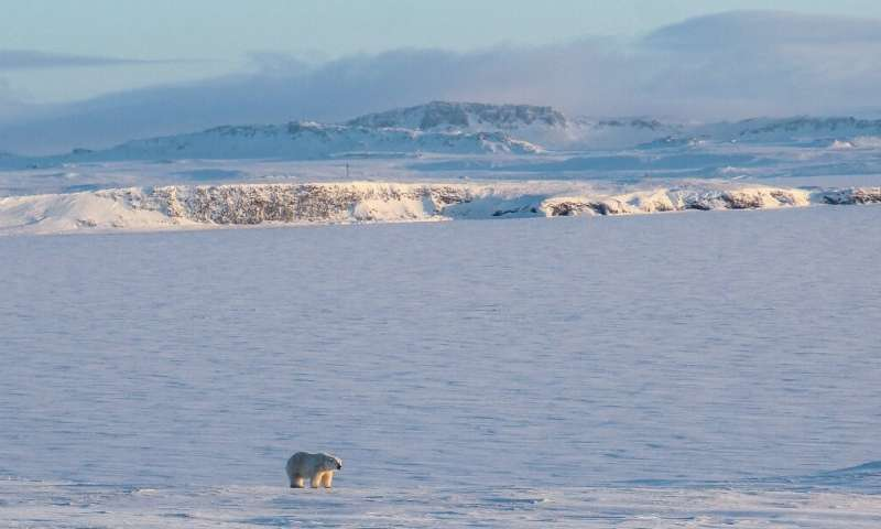 Russians living in Arctic settlements have sounded the alarm over dozens of bears entering areas of human habitation, particular