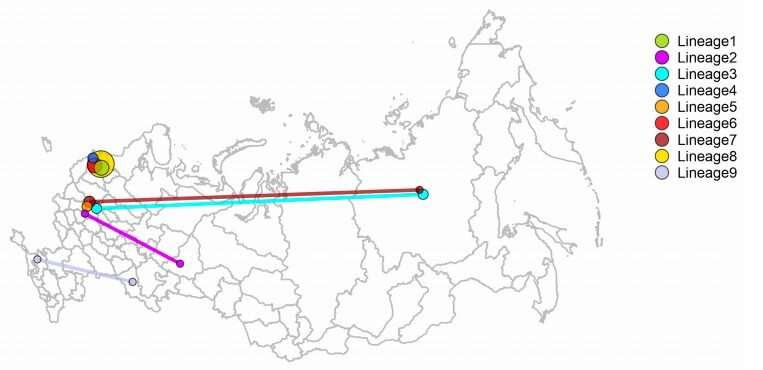 Russia's COVID-19 strain did not come from China