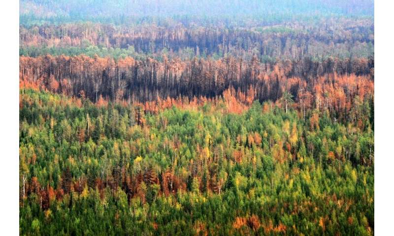 Russia struggles with wildfires in its remote taiga every summer