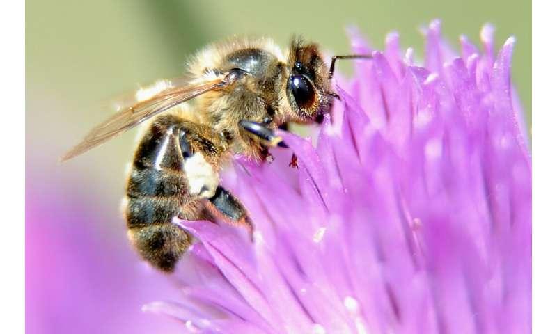 Os cientistas estimam o número de espécies de insetos em cerca de 5,5 milhões.  Apenas um quinto deles foi identificado e nomeado