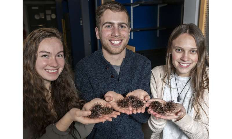 Sea urchins could prove to be Rhode Island's next climate-resilient crop
