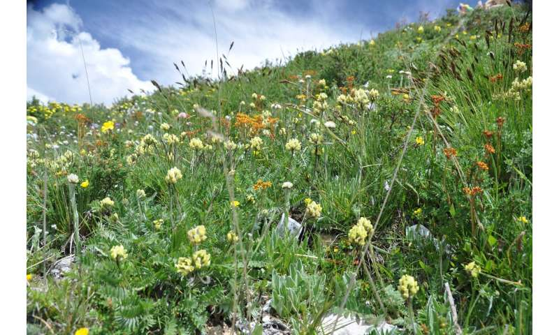 Seeds in Tibet face impacts from climate change
