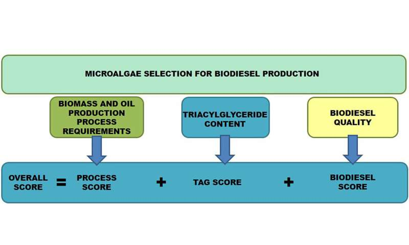 Selección de las mejores microalgas para la producción de biodiésel